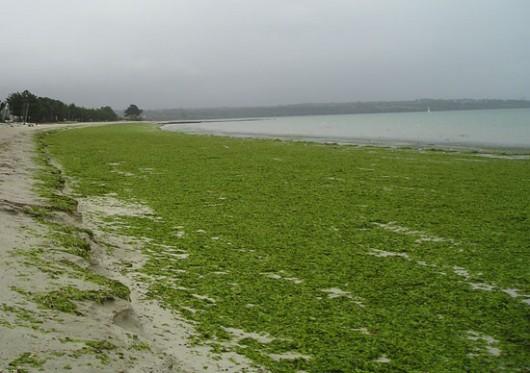 En Bretagne on a l'habitude des Dirty Beaches