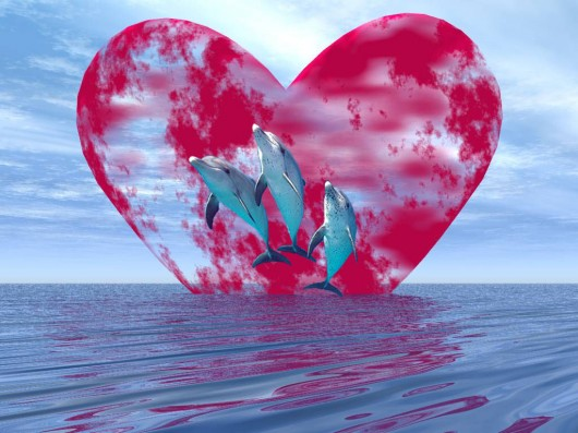 Forever Dolphin Love (pochette non contractuelle)